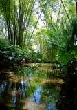 密林风景 图库摄影