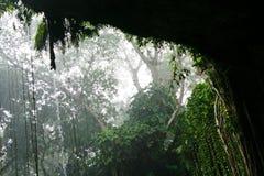 密林风暴 免版税库存图片