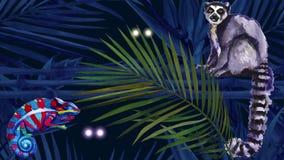 密林马达加斯加 在雨林闪动的眼睛的夜 皇族释放例证
