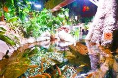 密林-水族馆迪拜 免版税库存图片