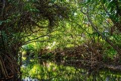 密林绿色 免版税库存图片