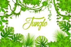 密林 藤本植物 雨林热带背景 向量例证