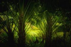 密林 免版税图库摄影