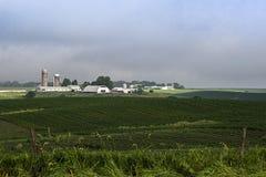 密苏里农田,玉米,大豆 免版税库存图片