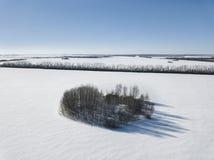 密谋在心脏形状与树的在领域 33c 1月横向俄国温度ural冬天 ae 库存照片