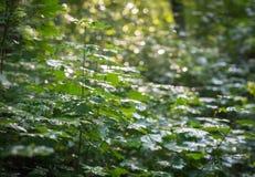 密集和湿被日光照射了灌木 免版税库存图片