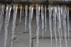 密集地被找出的冰柱在房子的屋顶下,象背景 免版税图库摄影