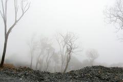 密集的使荒凉的雾森林 免版税图库摄影