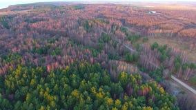 密集的具球果森林顶视图空中英尺长度-一个密集的杉木森林 股票录像