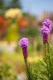 密集的多种花色鲜明之植物 库存照片