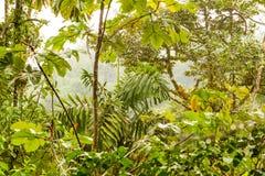 密集的密林植被 库存照片