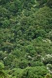 密集的山坡密林 免版税库存照片