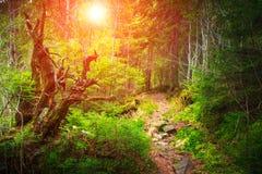 密集的山森林和树 免版税库存照片