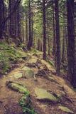 密集的山森林和道路树之间根  库存照片