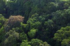 密集的森林树梢景色  库存照片