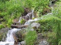 密集的森林瀑布 免版税库存照片