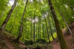 密集的森林谷 库存照片