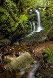 密集的森林醉汉瀑布 库存图片