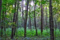密集的森林难贯穿的丛林 背景概念能源图象 俄国 调遣结构树 免版税库存照片