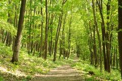 密集的森林 库存图片
