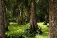 密集的森林 免版税库存照片