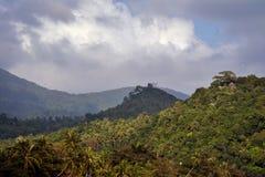 密集的热带密林用蒸发在雨以后的棕榈水 免版税库存图片