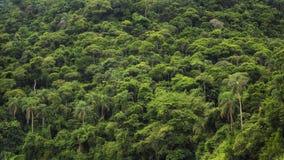 密集的热带雨林在巴西,自然背景 库存照片