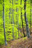 密集的结构树 库存图片