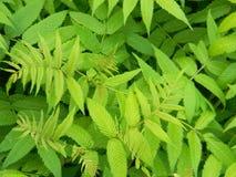 密集的绿色丛林 交织叶子和词根 库存照片
