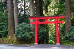 密集的美国加州红杉围拢的明亮的红色Torii门,红木前面 库存照片