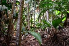 密集的雨林在塞舌尔群岛 免版税库存照片
