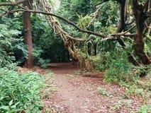 密集的雨林 免版税库存照片