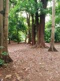 密集的雨林 库存照片