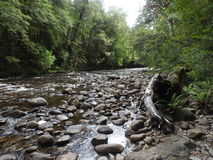 富兰克林哥顿狂放的河国家公园,塔斯马尼亚岛 库存照片