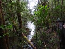 富兰克林哥顿狂放的河国家公园,塔斯马尼亚岛 图库摄影
