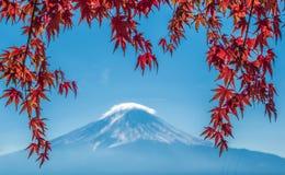 富士山和秋天槭树叶子, Kawaguchiko,日本 库存图片