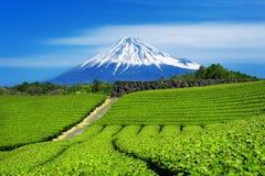 富士山和绿茶种植园在静冈,日本 图库摄影