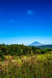 富士山在夏天 图库摄影