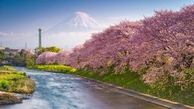 富士山在春天 股票视频