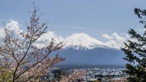 富士山美丽的景色用雪包括在一个晴天,与在前景的开花的树,日本 免版税图库摄影
