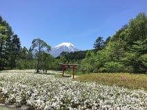 富士山风景 免版税库存照片