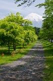 富士路径 库存照片