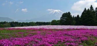 富士shibazakura 免版税库存照片