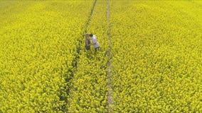 富感情的握手的男人和妇女,当跑在油菜子农场时 股票视频