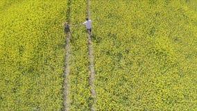 富感情的握手的男人和妇女,当跑在油菜子农场时 影视素材