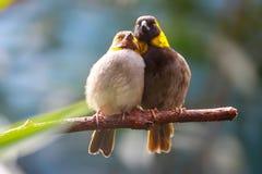 富感情的鸟 库存图片