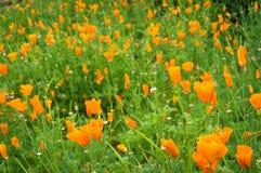 富有的橙色花明亮的花卉背景在绿草的 库存图片