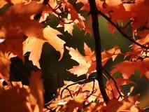 富有的秋叶 库存照片