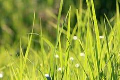 富有的绿色黄色草背景 免版税库存图片