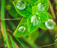 富有绿色草覆盖由早晨露水 免版税库存图片
